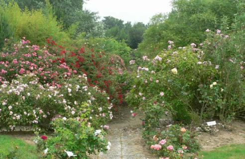 950 variétés de roses à la Roseraie de Vendée, en bord de mer